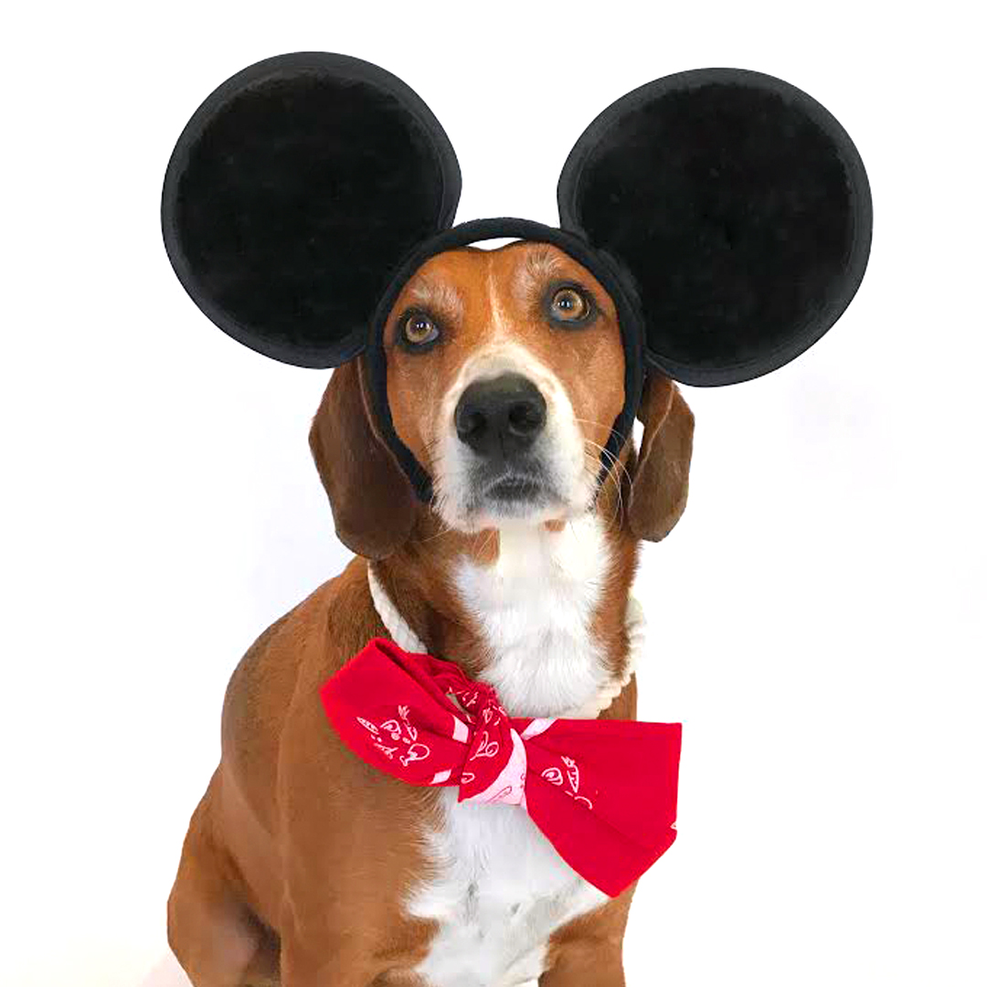 dog bandana Halloween costume Minnie Mouse