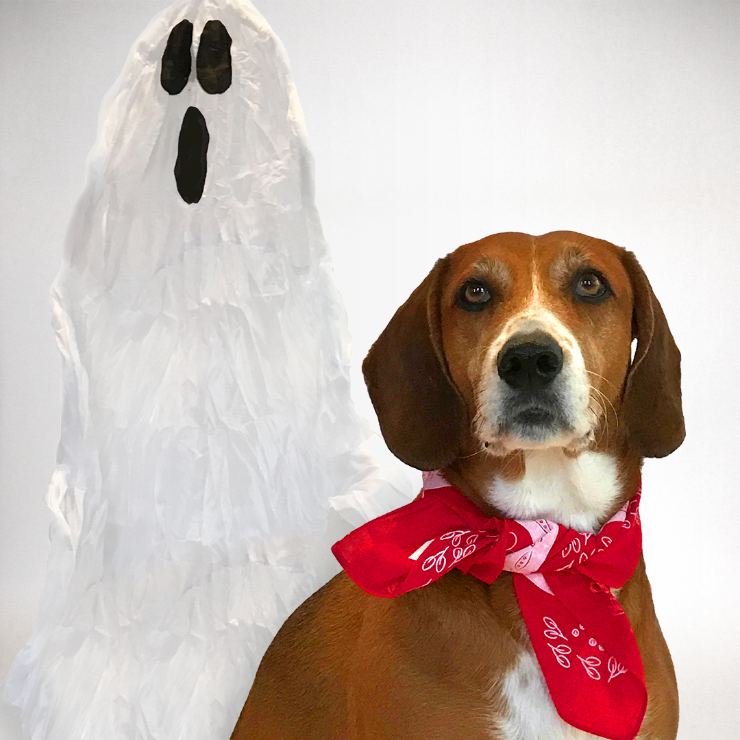 dog bandana Halloween costume Fred from Scooby-Doo