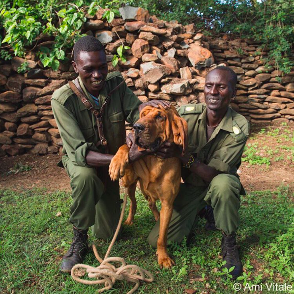 Working dogs Elephant-saving ranger dog