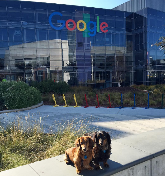 Dog-friendly offices Google