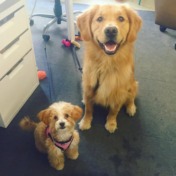 Dog-friendly offices Refinery29