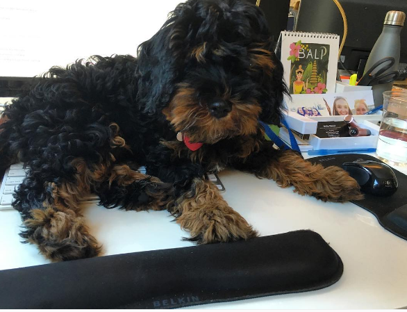 Dog-friendly offices PureWow