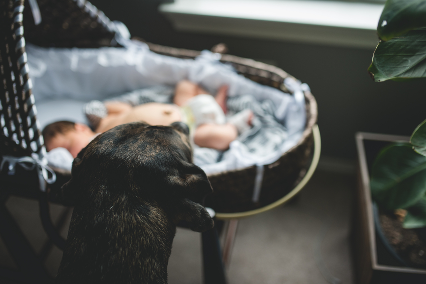 How to Make Sure Your Dog Doesn't Freak Out When You Bring Home a Baby