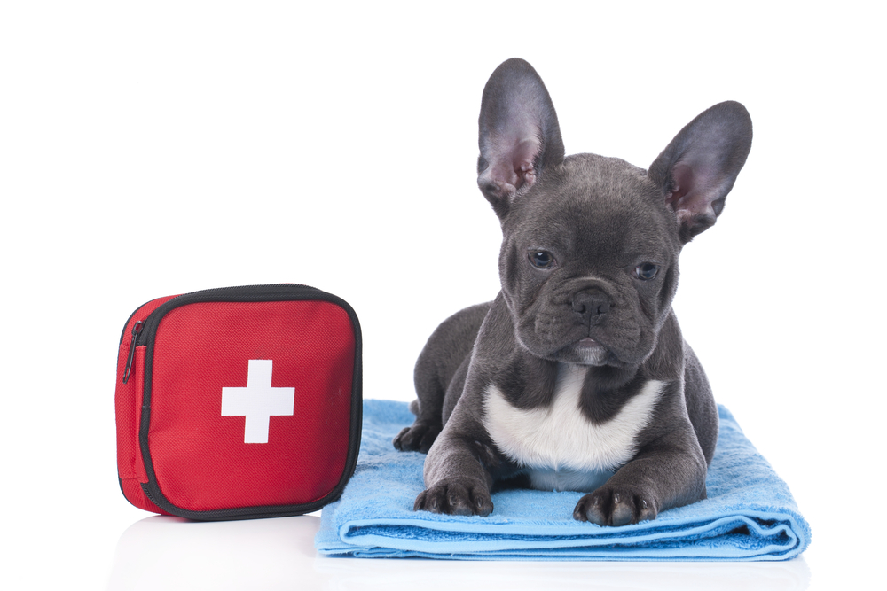 The Dog First Aid Advice You Need to Know