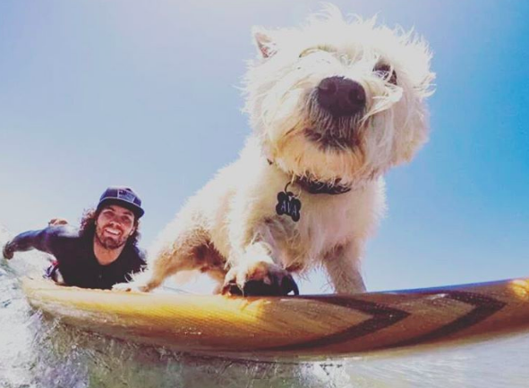 Working out with your dog surfing dog