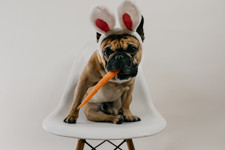 7 Healthy Easter Treats for Your Pup (Plus a Passover Cookie)