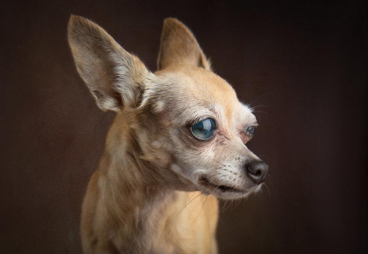 A Shining Star: Glamour Shots for Shelter Dogs