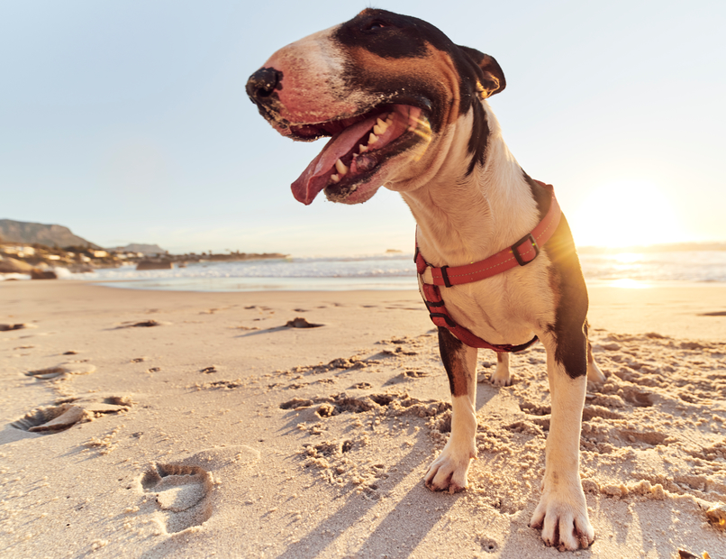 All Your Burning Questions About Pup Sunscreen, Answered