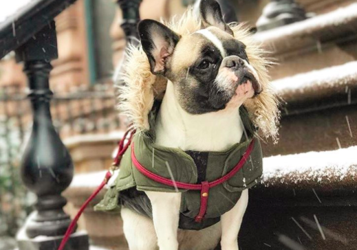 Trainer Hacks for Getting Your Pup Bundled Up