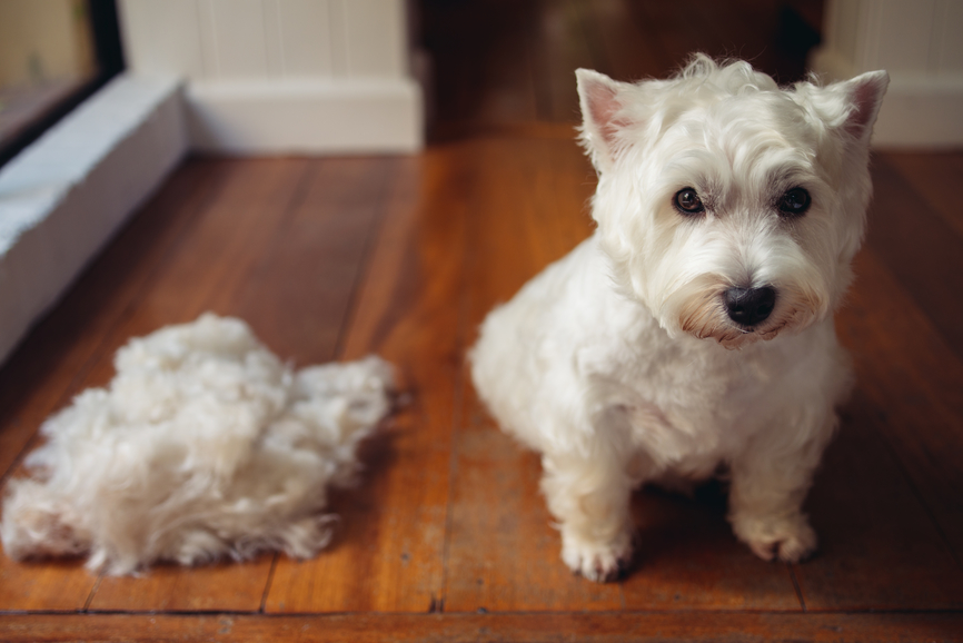 Pancho Explains: Grooming Isn't Just for Looks