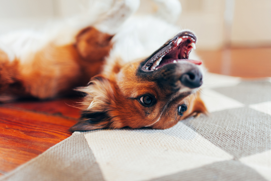 4 Things You Need to Know About Your Pup's Teeth