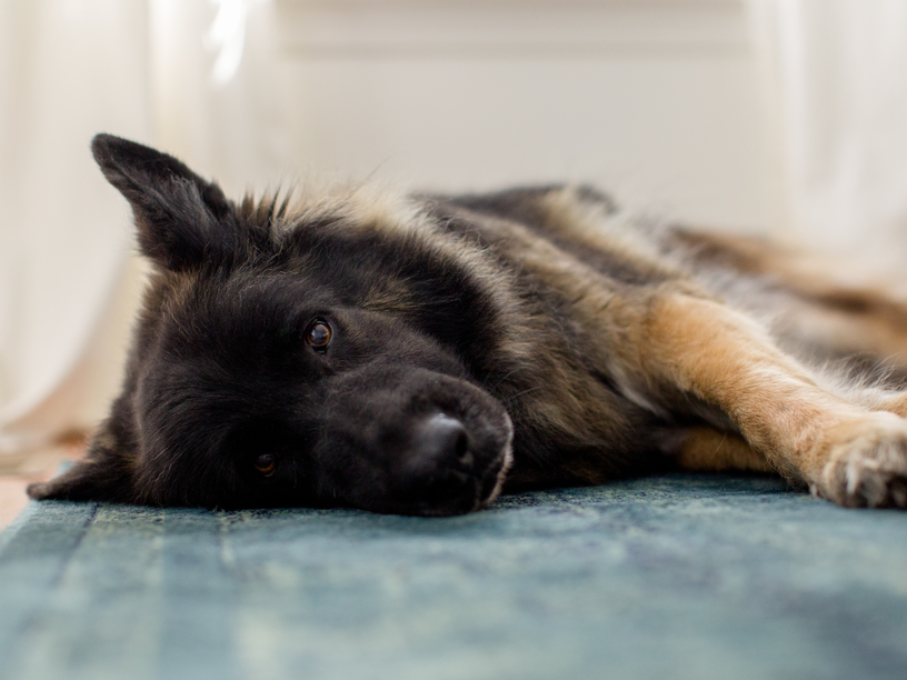 Natural Ways to Heal Your Pup's Hot Spots