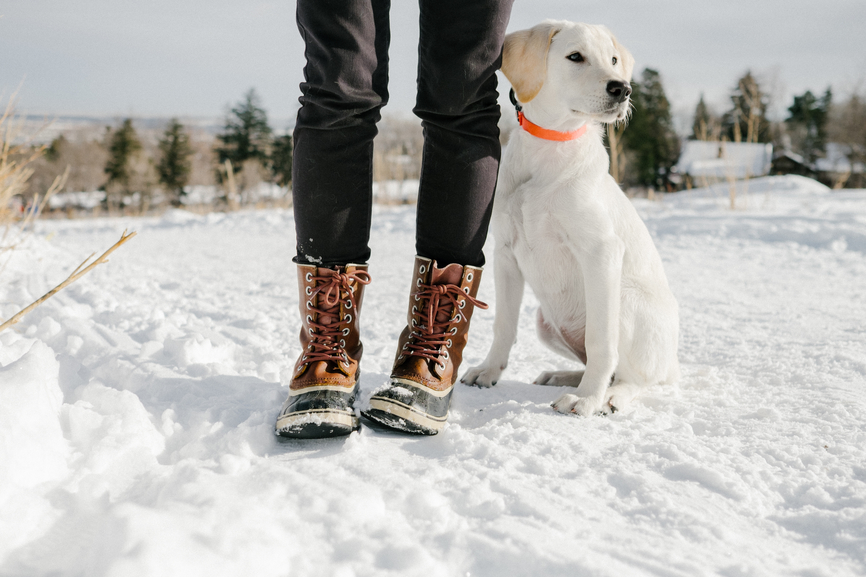 7 Snowy Winter Workouts To Do with Your Pup