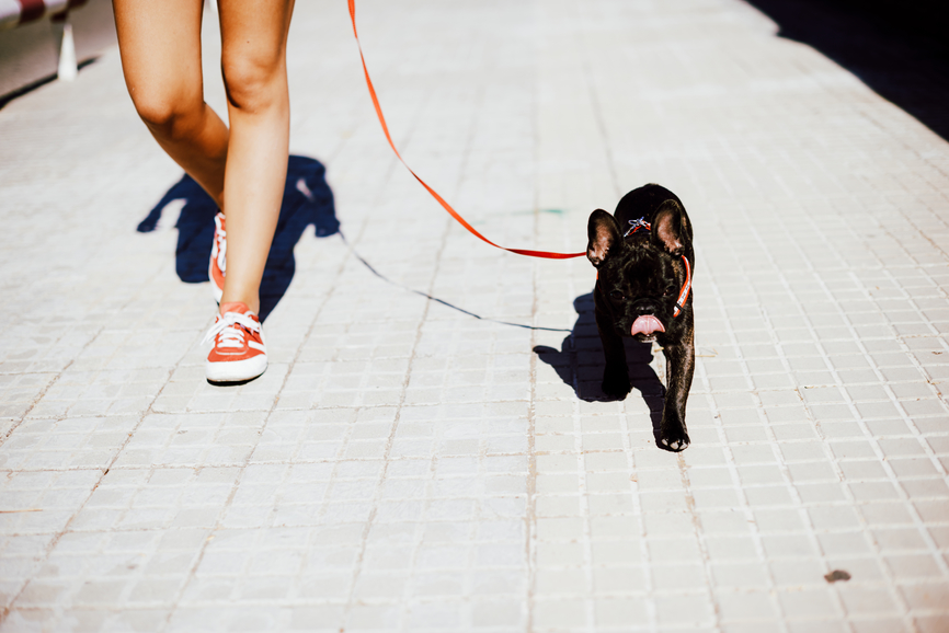 How to Find a Dog Walker You Can Totally Trust