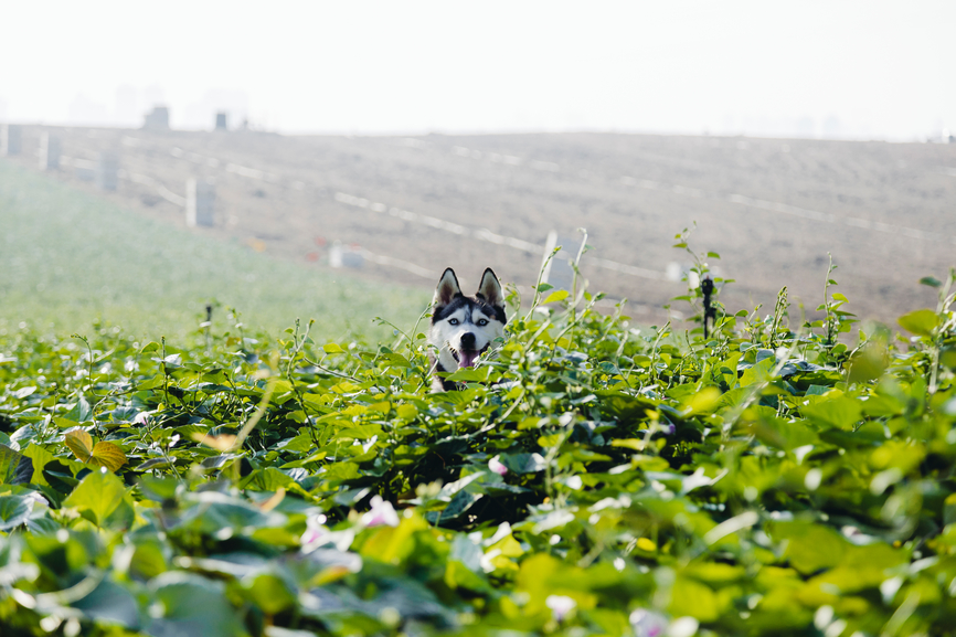 5 Things You Need to Know About GMOs Before Feeding Your Dog