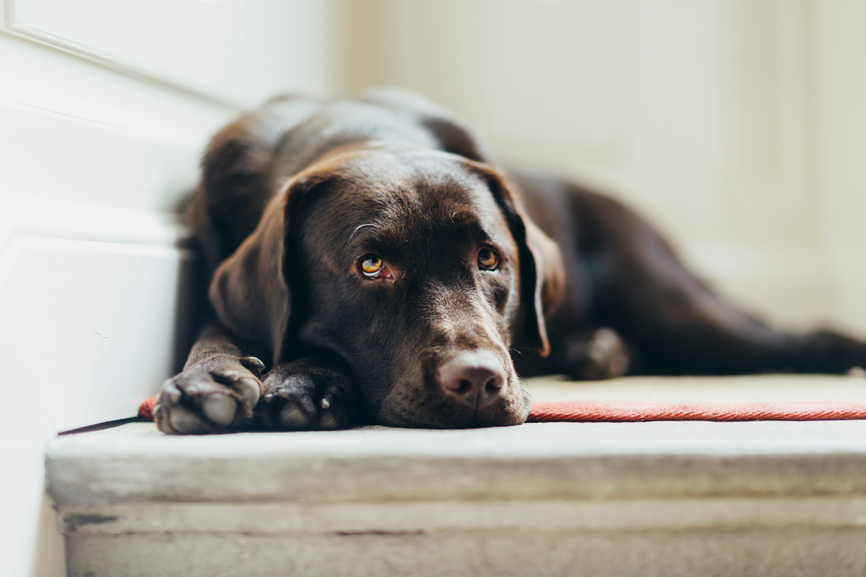 Why Your Dog's Diet May Be Making Them Tired and Cranky