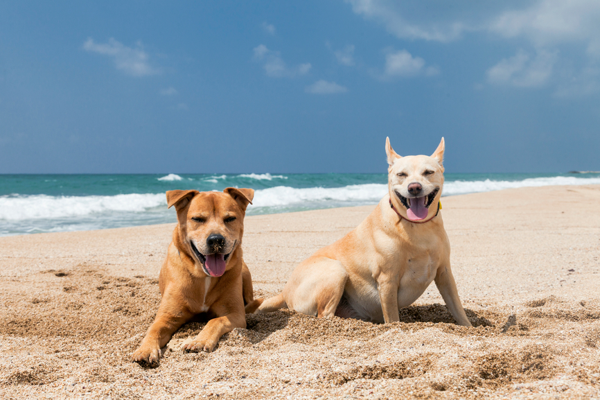 The 10 Most Pup-Friendly Beaches of All Time