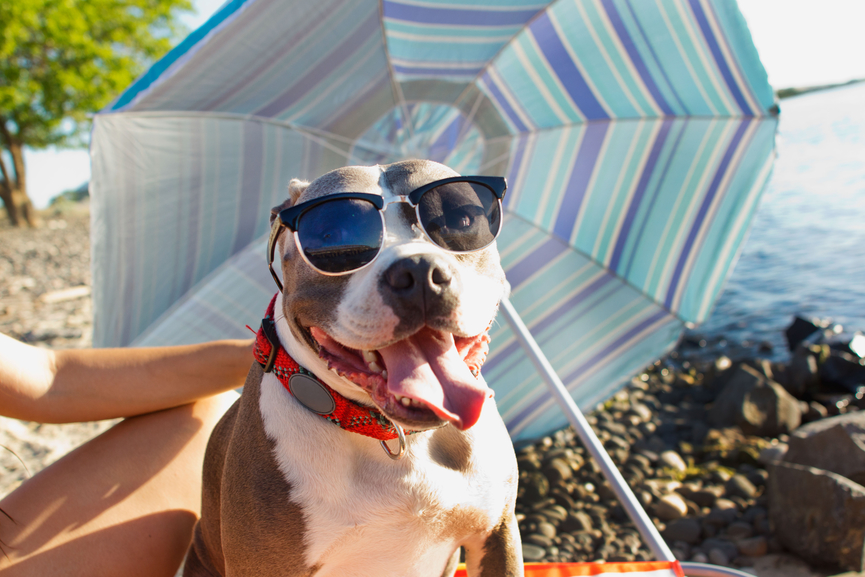 How to Protect Your Pup From the Top Summer Hazards