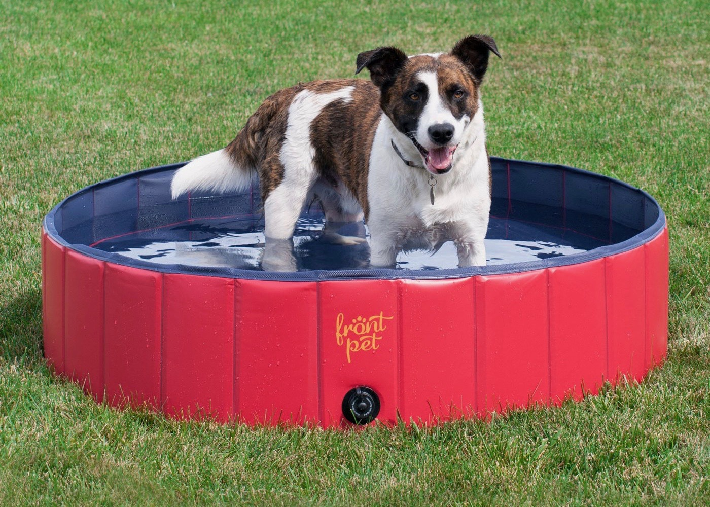 The 9 Best Water Toys For Pups This Summer My Ollie