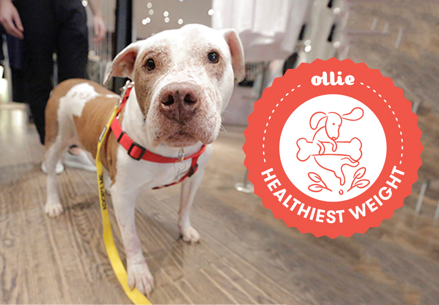 Meet the Rescue Pups in Our Healthiest Weight Program