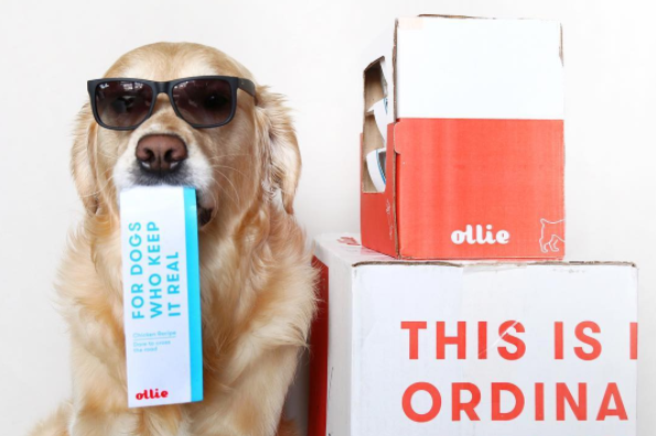 How to Travel With Ollie, Wherever You Go
