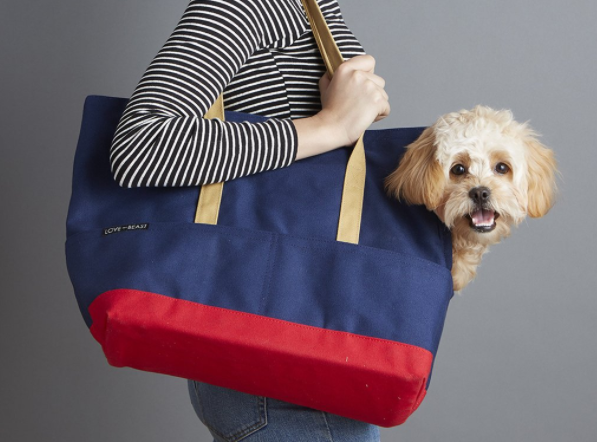 The Best Carriers for Your Pup, Depending on How You Travel