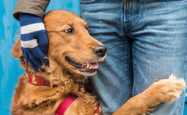 5 Things We Learned About Loubie the Hugging Pup