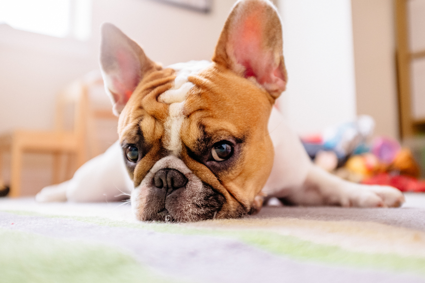 5 Reasons Your Pup Has Bad Gas (and What You Can Do About It)