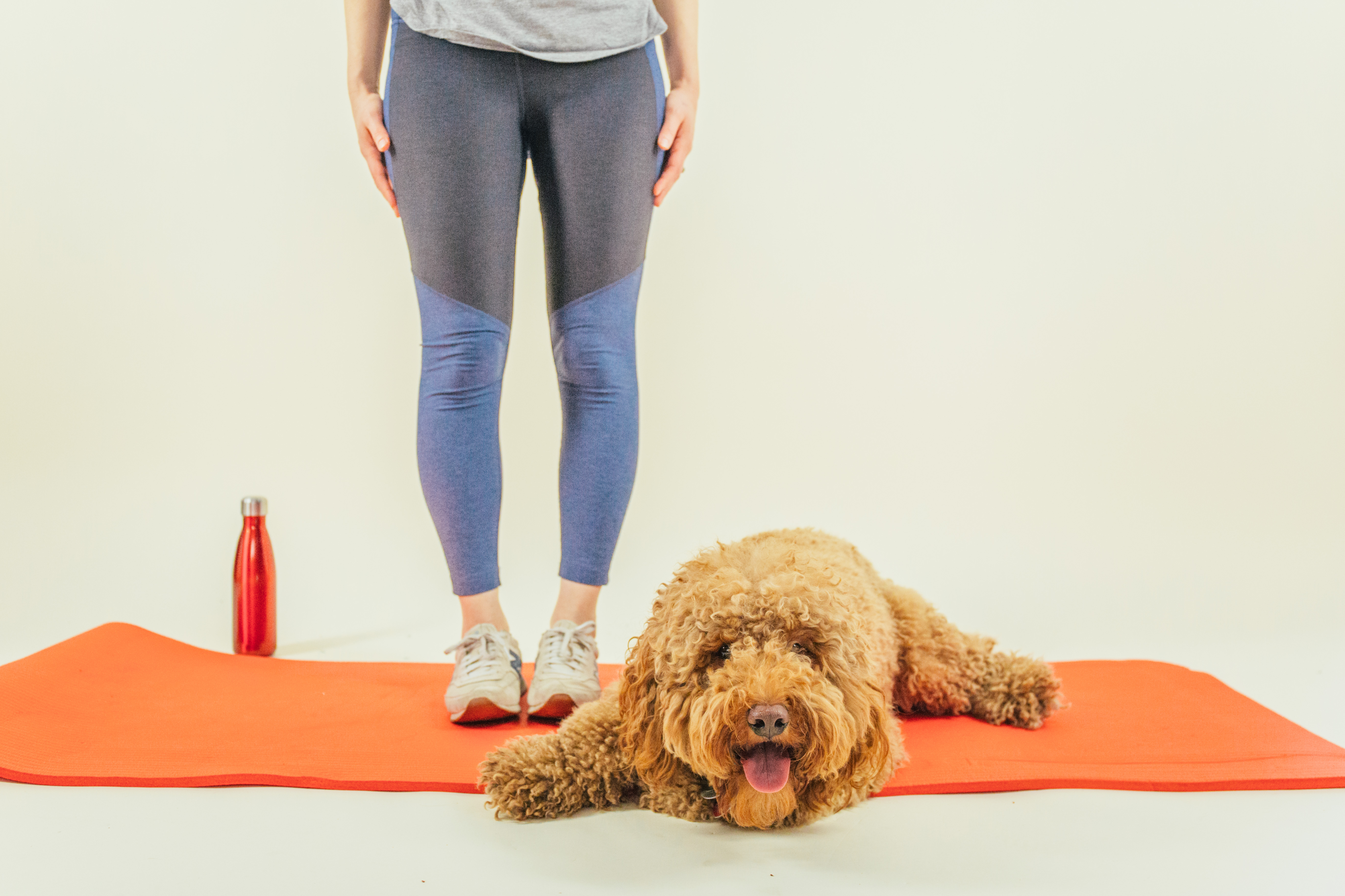 How to Make Your Pup Your Workout Buddy