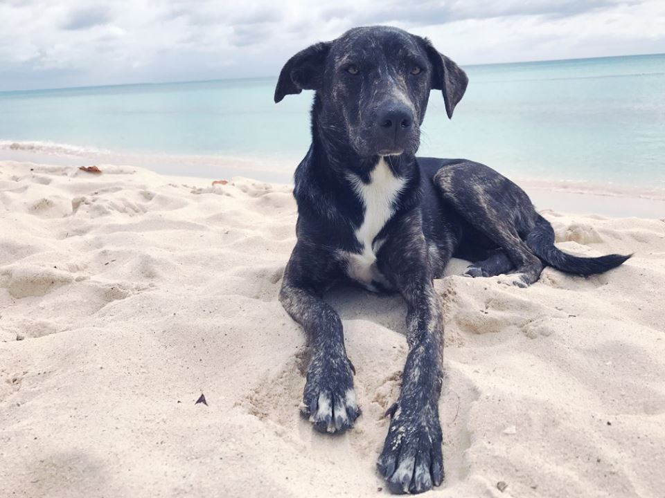 These Dominican Republic Rescue Pups Will Steal Your Heart