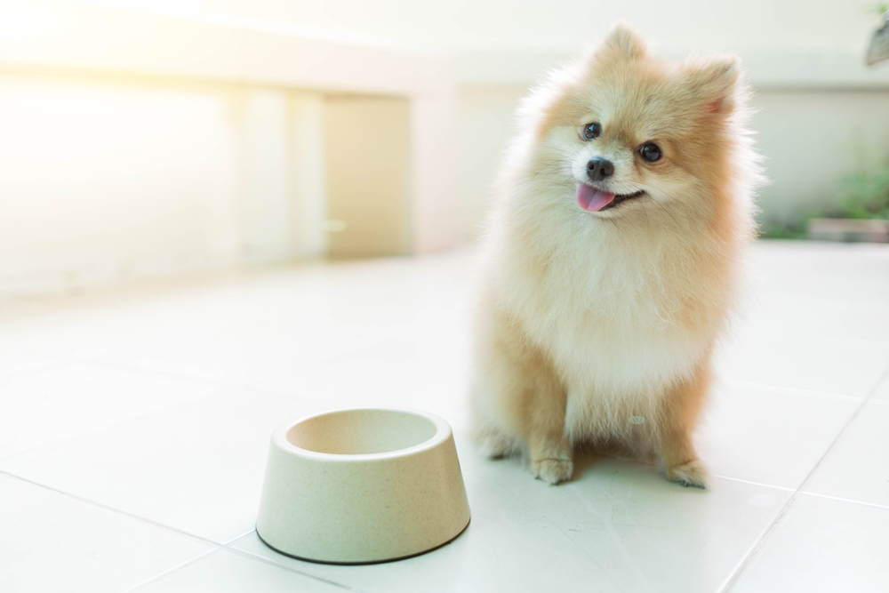 Avoid Scary Dog Food Recalls in Three Easy Steps