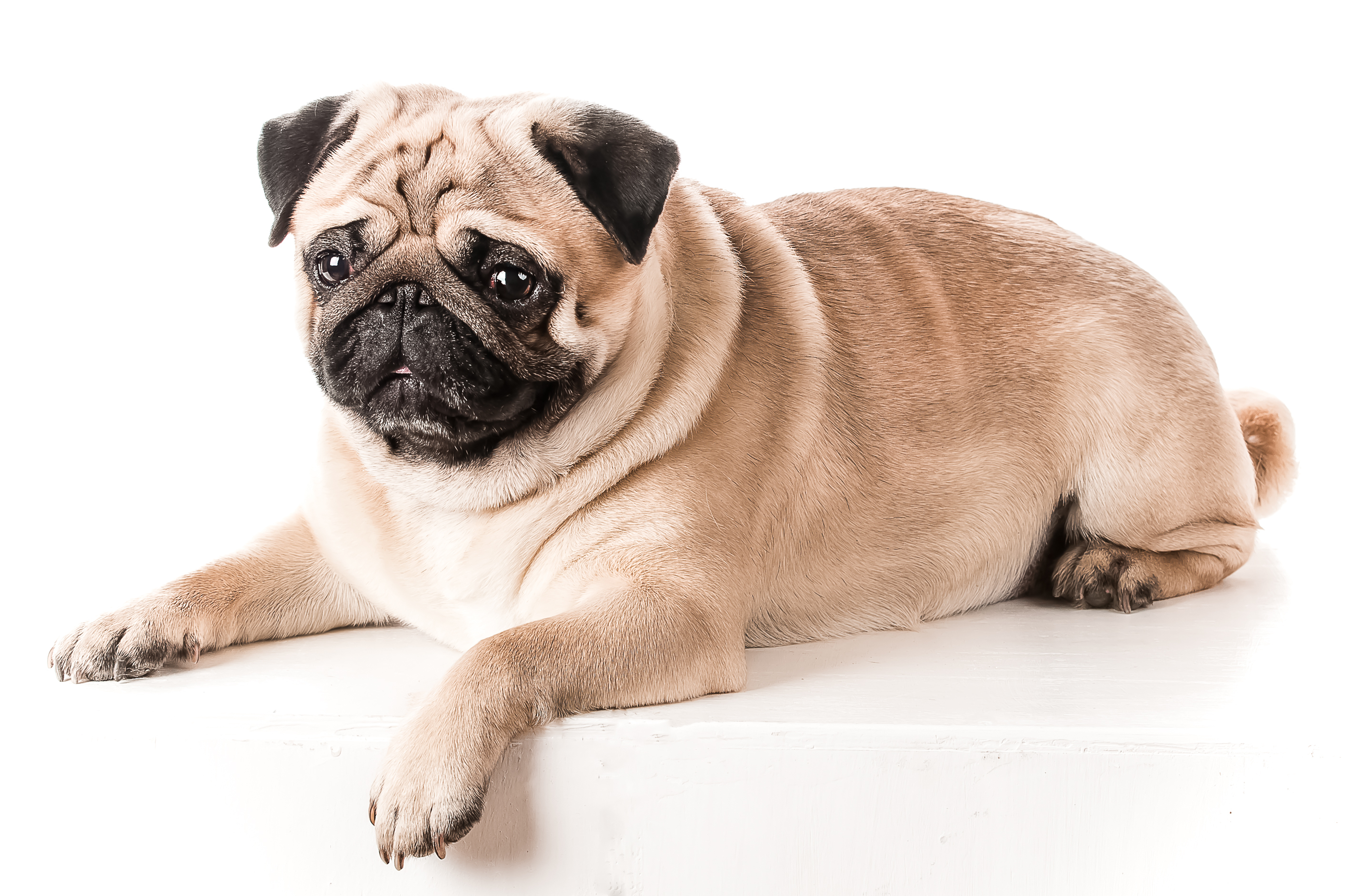 The Top 10 Breeds Most Likely to Gain Weight