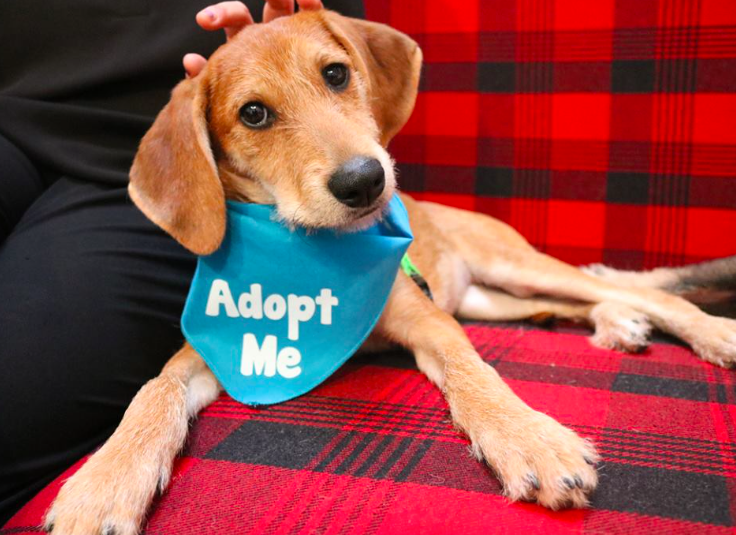 5 Things You Need to Know Before Adopting a Pup