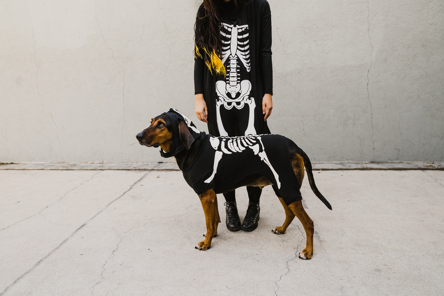 The Funniest Halloween Costumes for You and Your Pup