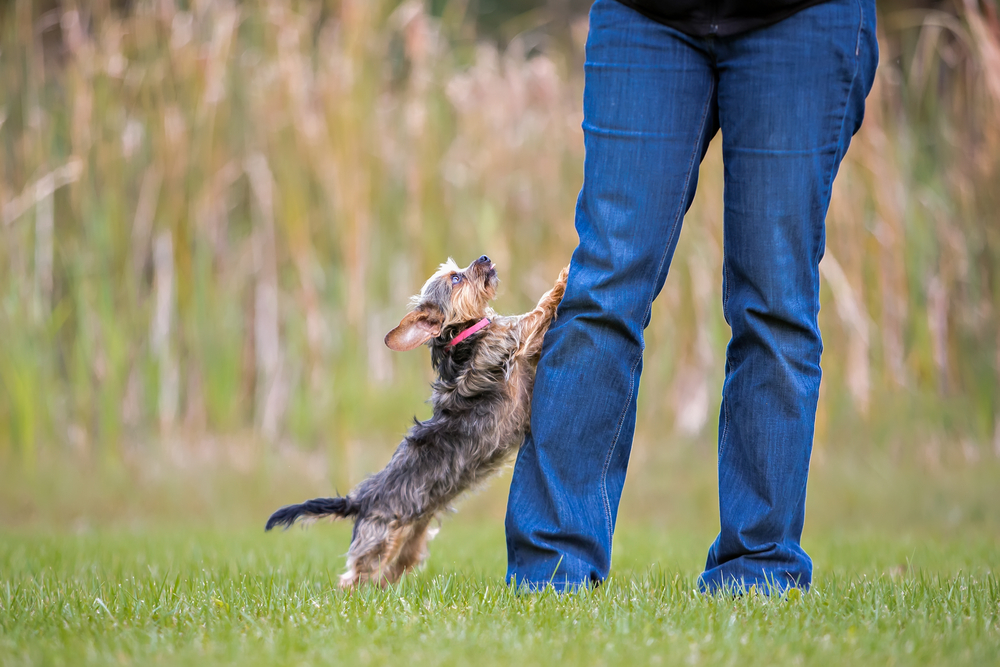 3 Simple Steps to Stop Your Pup from Jumping