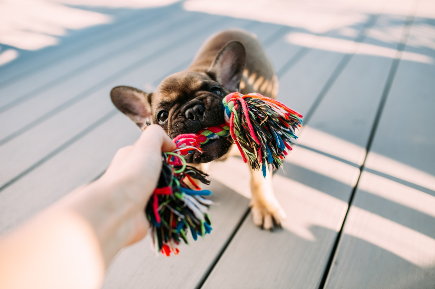 Easy DIY Toys Your Pup Will Love to Play With