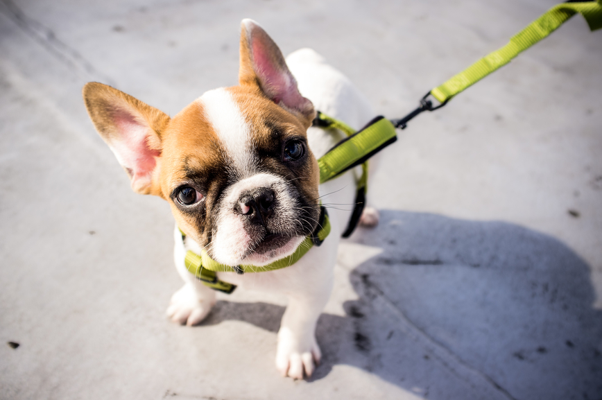 Why Your Puppy Doesn't Necessarily Need to Eat Puppy Food