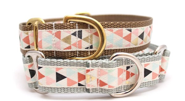 8 Collars Your Pup Needs This Spring