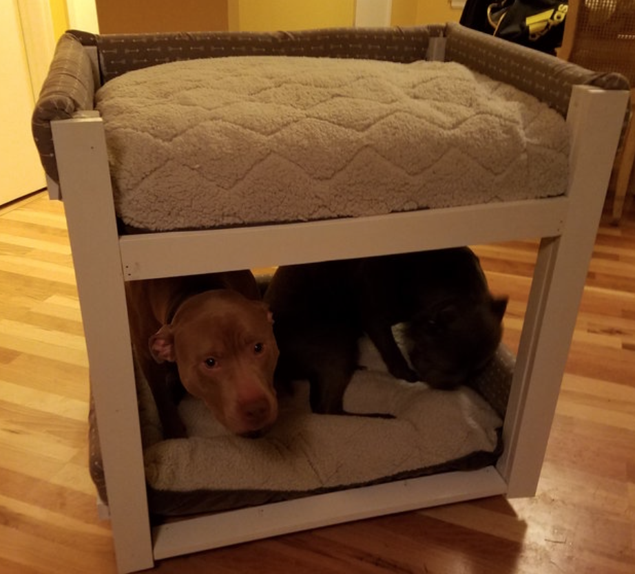 Dogs in bunk beds