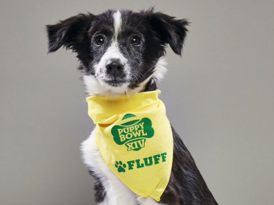 Puppy Bowl Pup