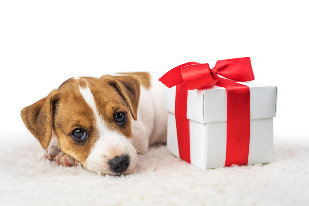 Why It's Okay to Have Puppy Remorse—And What You Can Do About It