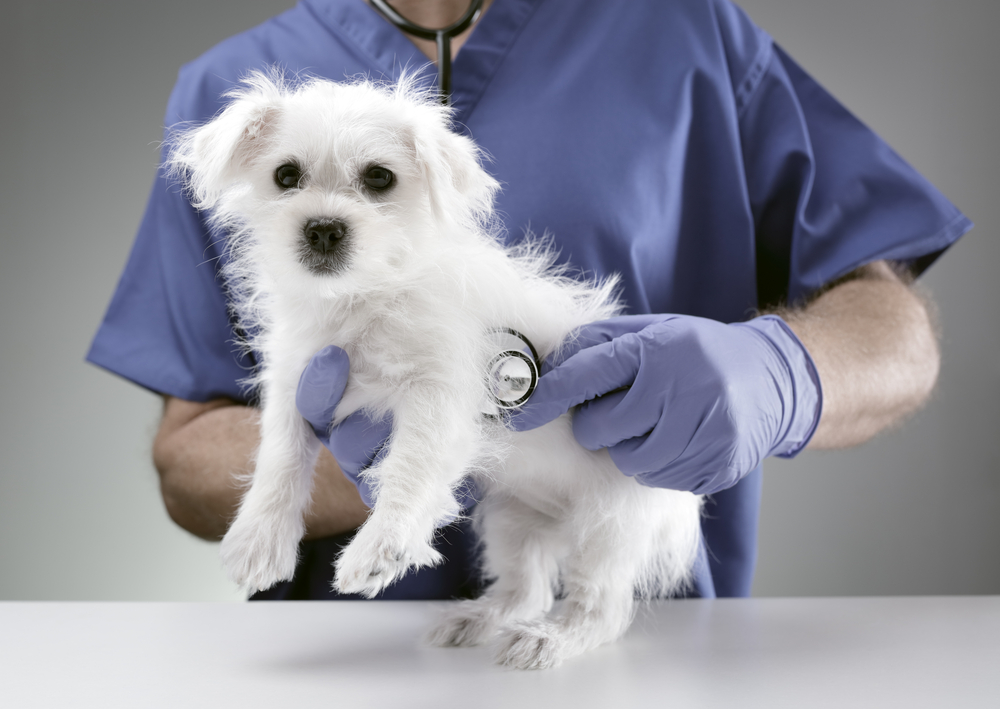 What's the Deal with Plastic Surgery for Pups?