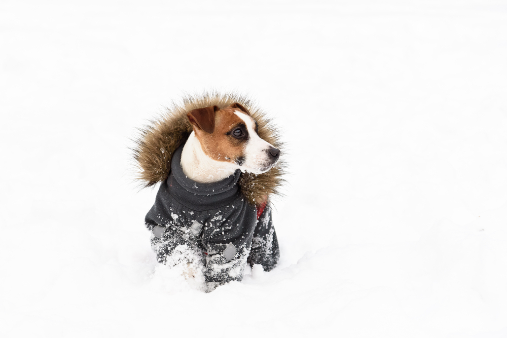 Does Your Dog Really Need to Wear a Coat in Winter?