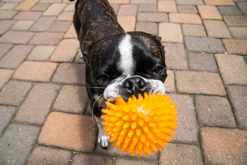 The 8 Best Balls for Every Type of Pup