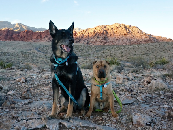 The 8 Most Pup-Friendly Hikes in the U.S.