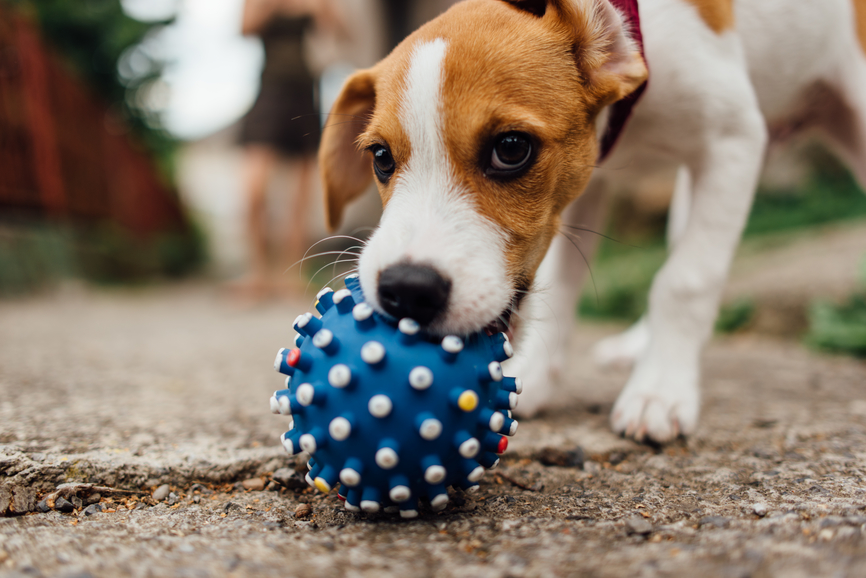 """How to Teach Your Dog to """"Drop It!"""" on Demand"""