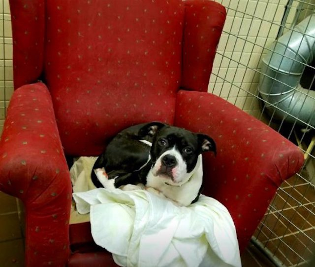 Dog in arm chair