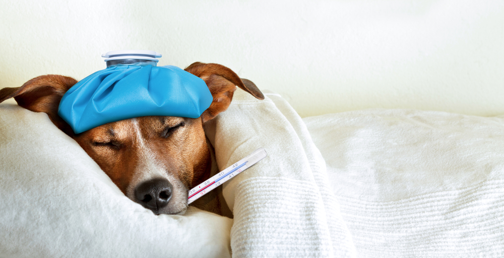 Everything You Need to Know About the Dog Flu