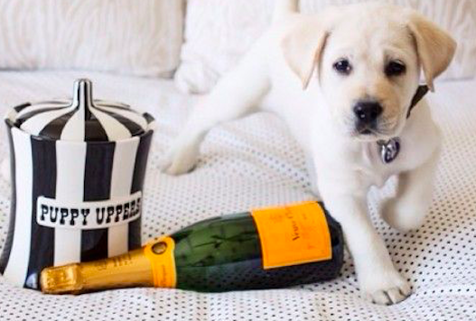 9 Treat Containers For Every Pup Personality