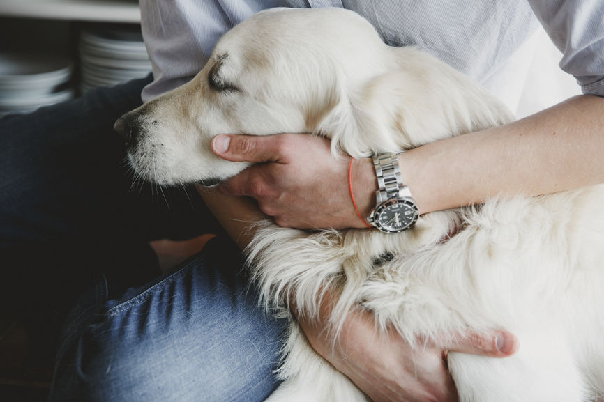 Quiz: Is Your Pup Therapy Dog Material?